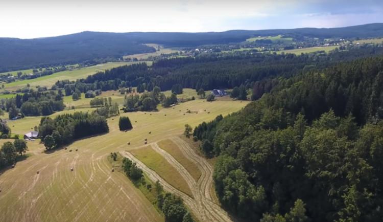 Ve Žďárských vrších zatím kvůli suchu památné stromy nehynou