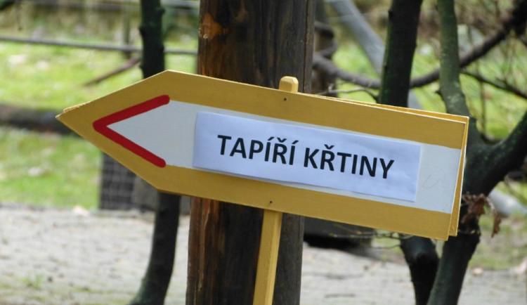 Jihlavská zoo pokřtila tapířího samečka.