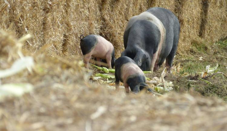 Biozemědělský den v Sasově