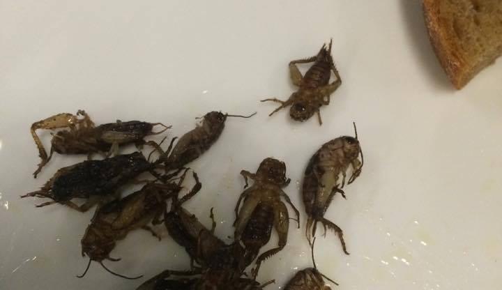 Ochutnávka hmyzích specialit