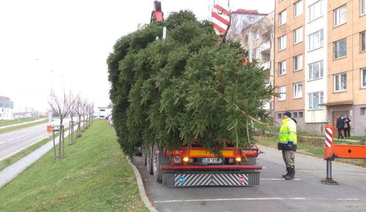 Vánoční stromeček v Jihlavě