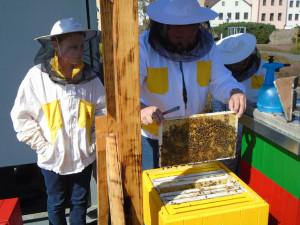 Včely na střeše Cityparku